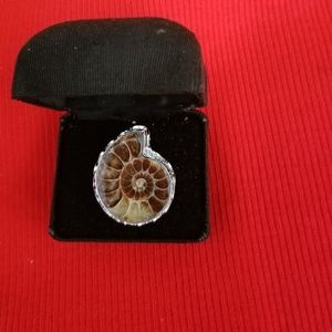 Real 925 Silver Ammonite Ring